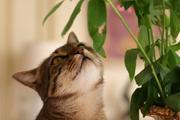 Otrovne biljke za ljubimce